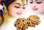 प्यार पाना चाहते हैं, तो उपहार में दें गौरी-शंकर रुद्राक्ष